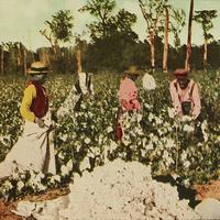 Cotton pickers, Houston, 1913